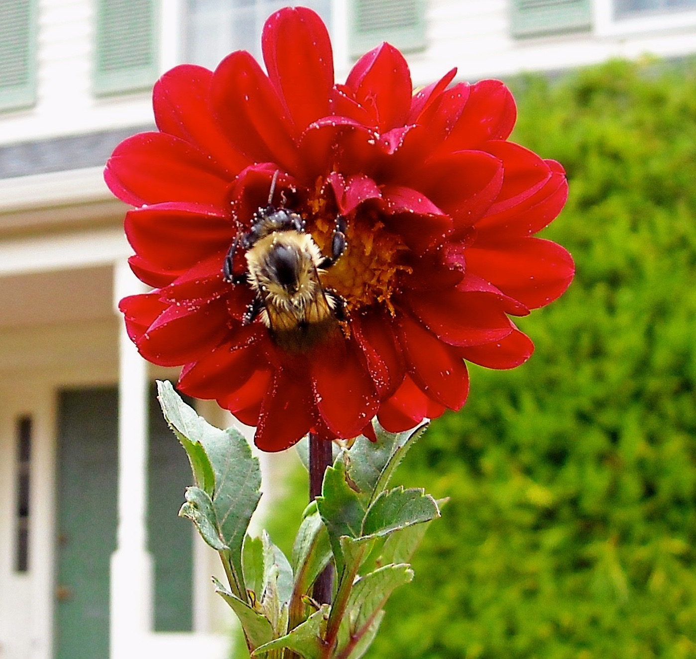 The Beauty of Bees: Why you should be glad your yard is always so ...
